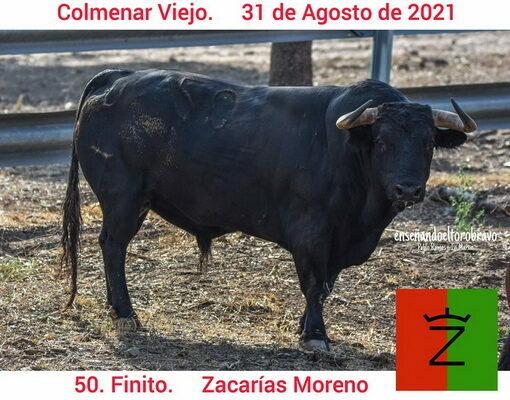 Toros de Zacarías Moreno